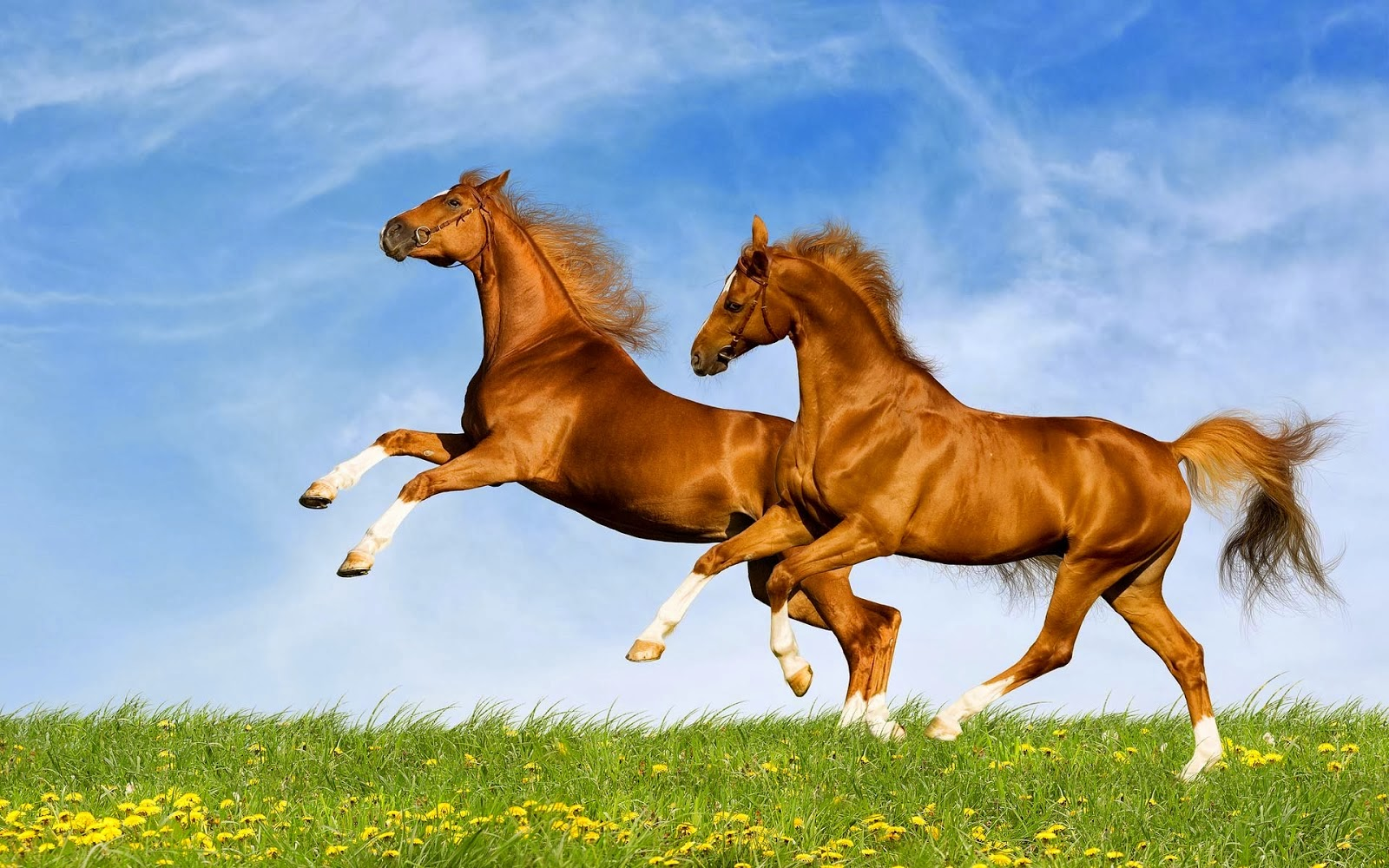 horses-24967-25647-hd-wallpapers